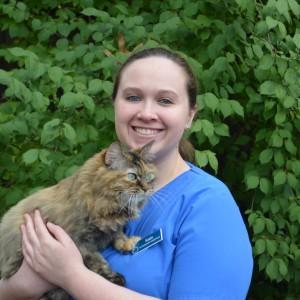 Our Team   Lexington Hospital for Cats