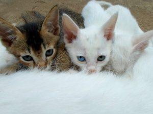 Keys to Calmer Vet Visits | Lexington Hospital for Cats